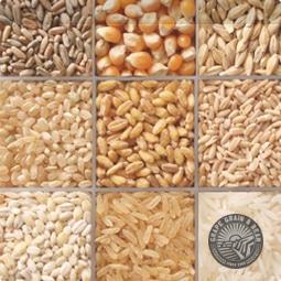 Bulk/Sack Grain